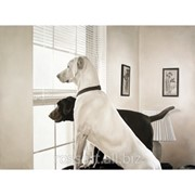 Детская картина dogs фото