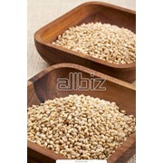 Семена зерновых культур фото