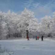 Семейный отдых зимой на природе! фото