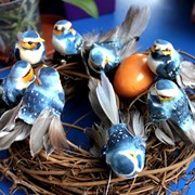 Птица, яйца фото