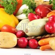 Семена сортовые овощей фото