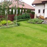 Ландшафтное озеленение территорий. фото