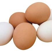 Яйцо куриное С0, С1, С2, С3 оптом фото