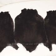 Шкурка ондатры-крашенна в черный цвет фото