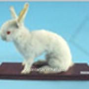 Чучело Кролик фото