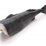 Сибас Чили 8-10 кг потрошенный без головы фото