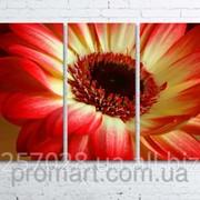 Модульна картина на полотні Червоно-жовта квітка код КМ80120-097 фото