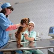 Ультразвуковые исследования органов животных УЗИ фото