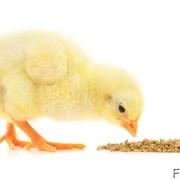 Комбикорм от 1 кг для цыплят старт ПК5 от 10дн фото