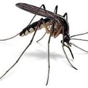 Дезинсекция, уничтожение, истребление комаров, избавиться от комаров фото