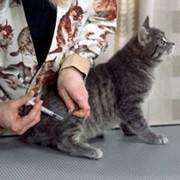 Вакцины для профилактики болезней кошек фото