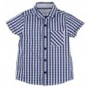 Рубашка 6579 фото