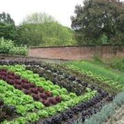 Декоративные огороды фото