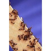Услуги дезинсекции (удаления вредных насекомых), уничтожение насекомых (тараканы, мухи, осы, муравьи, комары) фото