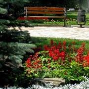 Устройство цветников и клумб №16 фото