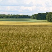 Продам землю (поле) фото