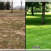 Восстановление газона, реставрация газона фото
