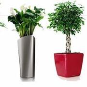 Консультации по уходу, размещению, покупке растений фото