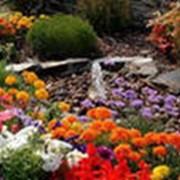 Многолетние декоративные растения фото