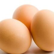 Услуги инкубации яиц домашней птицы фото