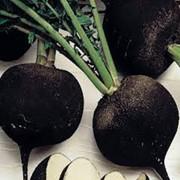 Семена редьки Черная редька 3 г фото