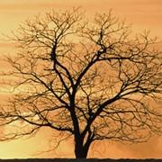 Поиск и оценка состояния захоронения. фото