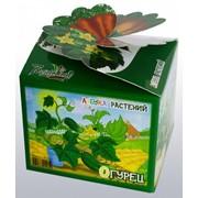 Огурец Азбука растений Bontiland наборы для выращивания, (411654) фото