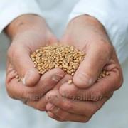 Экспорт зерновых, масличных, бобовых и крупяных культур фото