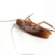 Истребление тараканов фото