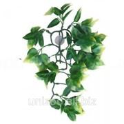 Террариумное растение Hagen Exo Terra AMAPALLO (M) фото