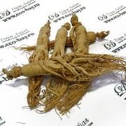 Женьшень белый сушеный корень 25.6 гр. фото