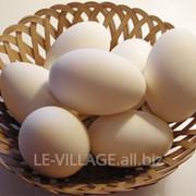 Гусиные инкубационные яйца фото