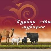 Продажа животных на Курбан Айт фото