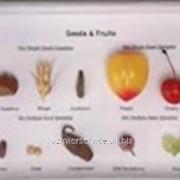 Коллекция семян и плодов фото