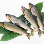 Рыба купить в Украине фото