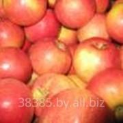 Яблоки свежие Айдаред фото