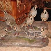 ЧУЧЕЛА Птицы фото