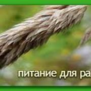 Рекомендации по использованию удобрений и питанию растений фото