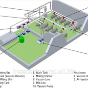 Sistem de muls oi tip RTS la conducta фото