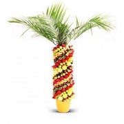 Фруктовая пальма фото