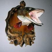 Изготовление чучел голова щуки на резном медальоне фото