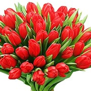 Тюльпаны оптом к 8 марта от производителя! фото