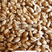 Крупа пшеничная яровая, пшеничная крупа яровая оптом, крупа яровая пшеничная от производителя, крупа пшеничная яровая со склада фото