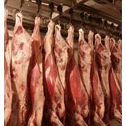 Мясо говяжье полутуши охлажденное фото