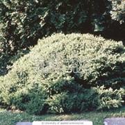 Посадка деревьев и растений – на вкус и цвет фото
