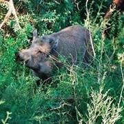 Охотничий тур на кабана фото