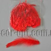 Перья красные 5-14см 50шт 570429 фото