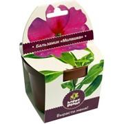 Бальзамин Happy Plant наборы для выращивания фото