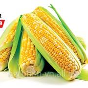 Насіння кукурудзи Піонер PR38A79* , п.о. фото