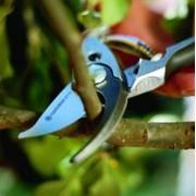 Омолаживающая обрезка фруктовых деревьев фото